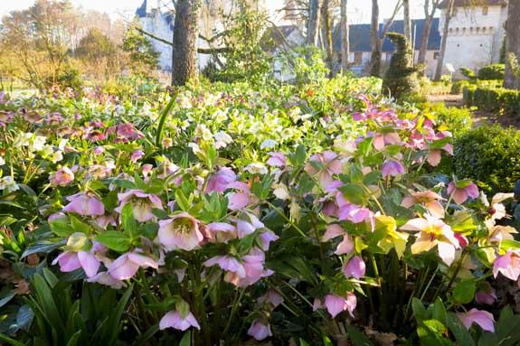 avril floraison