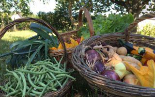 panier de legumes du rivau